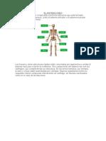 El Sistema Oseo