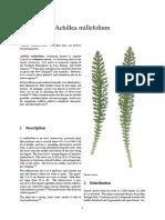 1Achillea millefolium