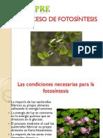 10) Fotosintesis C3 - C4 y CAM.pdf