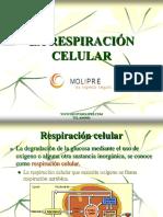 12)Respiración Celular