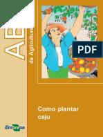ABC-como Plantar Caju
