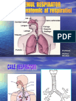 28261399 Sistemul Respirator