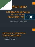 Biomecanica Muñeca Mano