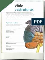 SISTEMA NERVOSO PAG 6.pdf