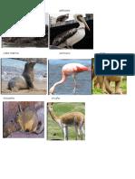Fauna de La Provincia de Tacna