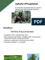 Coniferophyta (Pinophyta)