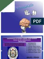 FENIX - Sistemas Neuropsicologicos