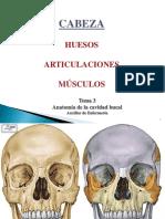 Huesos, Nervios y Musculos de La Cabeza