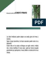 Tallo -  botánica morfológica - FAUBA