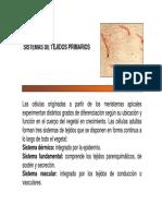 Tejidos primarios - botánica morfológica FAUBA