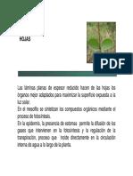 Botánica morfológica (FAUBA) - Hojas