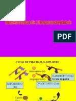 Ciclos de Vida Angiospermas y Gimnospermas botánica morfológica - FAUBA