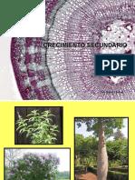 Crecimiento_secundario botánica morfológica - FAUBA