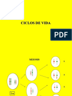 Ciclos de Vida Angio Micro botánica morfológica - FAUBA