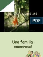 TP3 - Compuestas Botánica sistemática- FAUBA