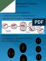 TP9 Ciclos Briofitas Pteridofitas Botánica sistemática- FAUBA