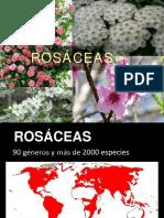 TP6 - Rosáceas Botánica sistemática- FAUBA