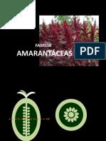 TP11 Cariofilales Malvales Mirtales Apiales Botánica sistemática- FAUBA