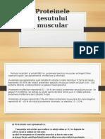 Proteinele u0163esutului Muscular