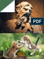 Database Re Factoring :