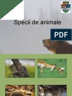 Specii de animale.ppt