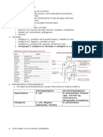 Diagnóstico de Enterobacterias