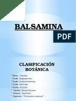 BALSAMINA