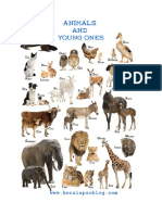 young animals.docx