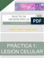 Practicas Microscópicas de Patología