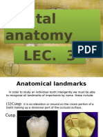 Dental Anatomy Lec.3