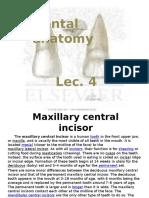 Dental Anatomy Lec.4