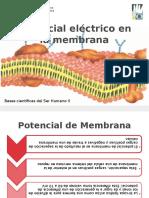 Trabajo- Potencial Electrico en La Membrana