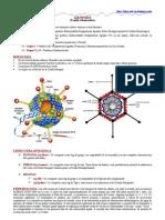 Adenovirus, Rinovirus, Coronavirus