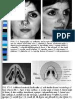 Rhinoplasty Anatomy 2001 01