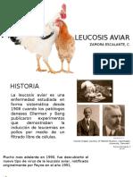 LEUCOSIS AVIAR