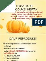 DAUR REPRODUKSI.pptx