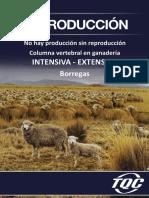 BORREGOS TQC.pdf