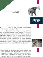 mamuts powerpoint.pptx