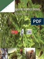 Control Biologico Mosca Blanca INISAV