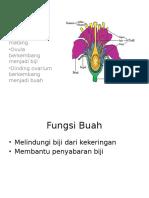 anatomi buah dan biji