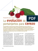 Ayala.et Al 2009 Importancia de Portainjertos de Cerezo