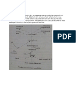 Biosintesis Karbohidrat