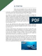 La Vaquita marina.docx