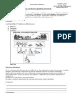 Flujo de energía.pdf