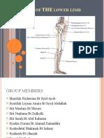 Nerve of the Lower Limb Edited Lagi