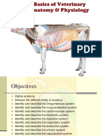 basicsofveterinaryanatomyphysiology-160929052207