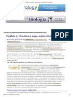 Glucolisis y Respiracion Celular