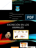 Excreción en los animales.pptx