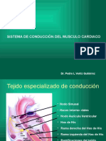 Sistema Exitoconductor