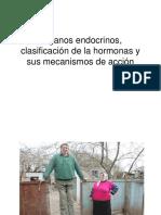 Clase 1 endocrino Órganos endocrinos, clasificación de la hormonas y